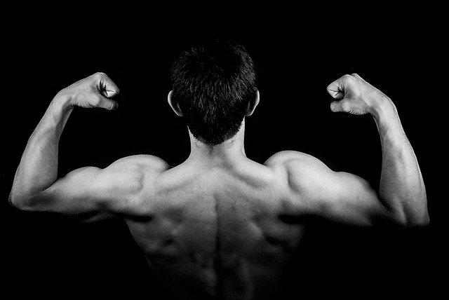Pourquoi l'hypertrophie du muscle Est-elle plus marquée chez l'homme que chez la femme ?
